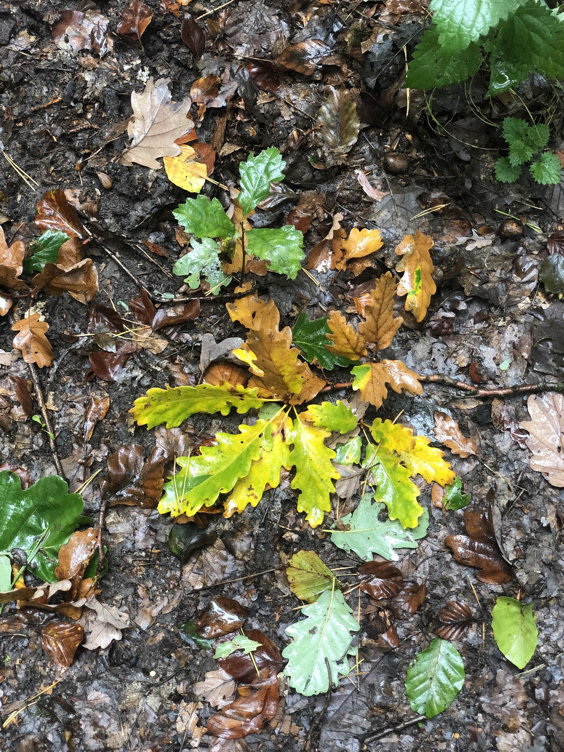 leaf, plant part, nature, day, plant, land, growth, field, no people, leaves, beauty in nature, high angle view, close-up, autumn, outdoors, dry, change, falling, vulnerability, tranquility, maple leaf, natural condition