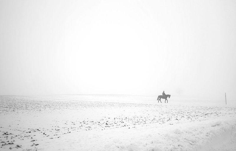 Horse wintertime