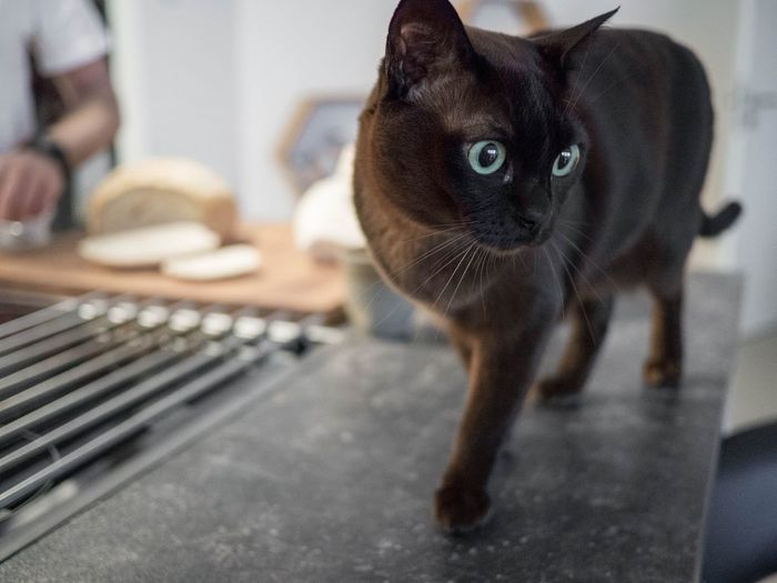 Close-up portrait of cat on table