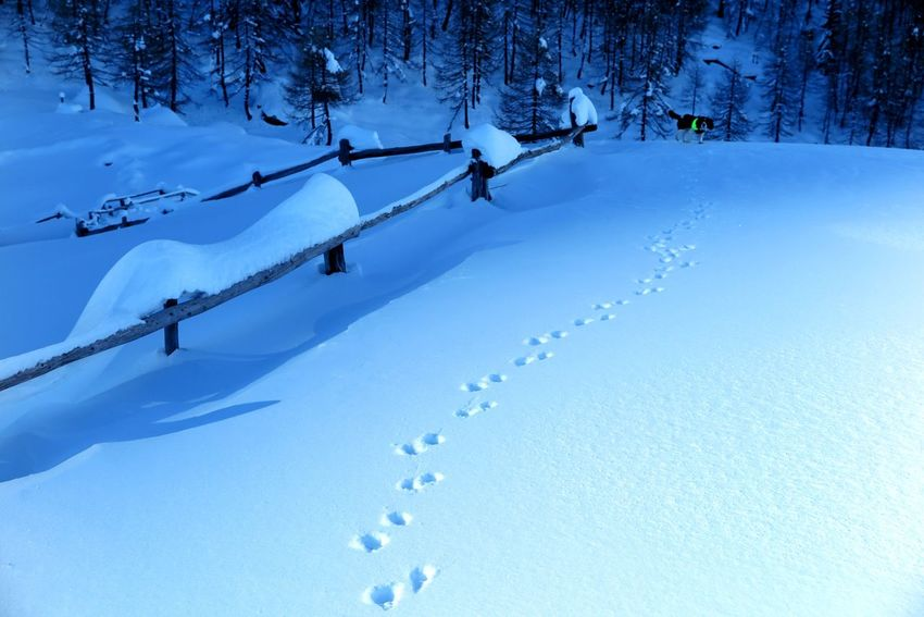🐕 Cech 🐾 Impronte Orme Neve Lendine Mountain Snow Steps Snow Cold Temperature Tree Landscape Nature Forest