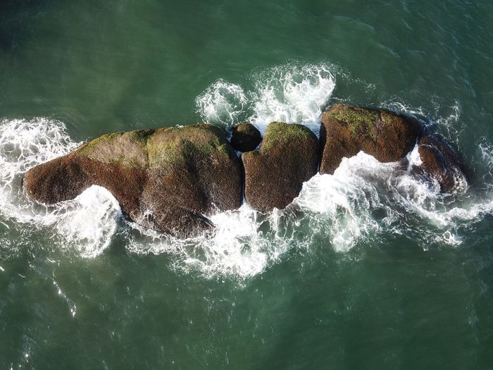 High angle view of crab on rock in sea