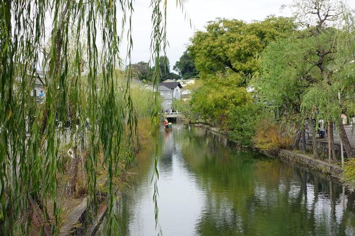 Reflection Water Outdoors Nature Beauty In Nature Willow Tree Kurashiki Japan Tourist Attraction  Tourist Destination Tourist Boat Trip Canal Green Tree Vacation Relax