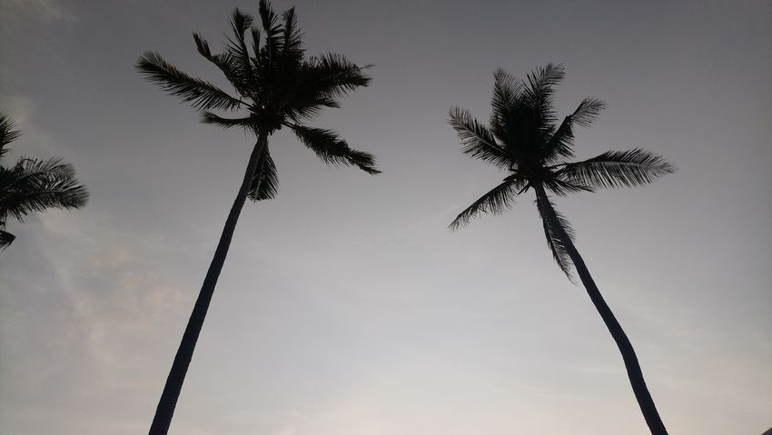 I looked up and saw this! I realised vacation just got started! Beauty In Nature Coconut Palm Tree Day Growth Low Angle View Nature No People Outdoors Palm Leaf Palm Tree Plant Silhouette Sky Tall - High Tranquil Scene Tranquility Tree Tree Trunk Tropical Climate Tropical Tree Trunk The Traveler - 2018 EyeEm Awards