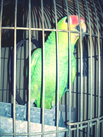 Queen of the house,:)
