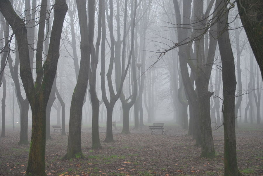 Atmosphere Eye4photography  From My Point Of View Italy Mist Monza Mysterious Nikon Park Purist In Photography The Purist (no Edit, No Filter) Tree