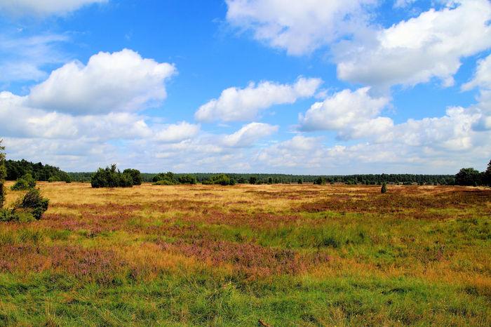 Lüneburger Heide Beauty In Nature Cloud - Sky Day Field Landscape Lüneburgerheide Nature No People Outdoors Sky