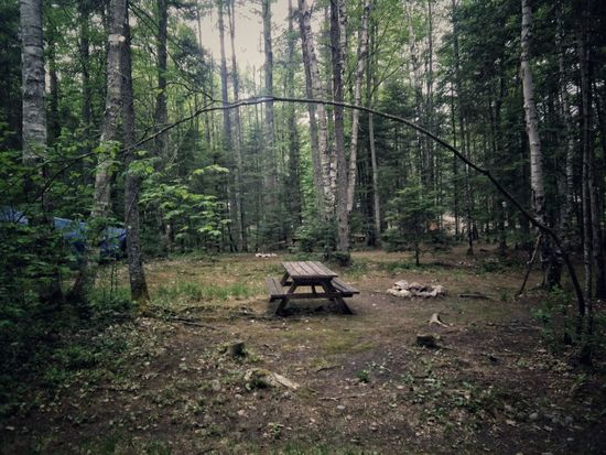 Camping Picnic Table Frame Branch Trees Nature_collection Nature Photography Green Lush Clearing Vacation Tranquility Traveling