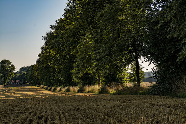 farmland Agriculture Beauty In Nature Day Farmland Field Grass Growth Gut Rohlstorf Landscape Nature No People Outdoors Rural Scene Scenics Schleswig-Holstein Sky Sunlight And Shadow Tranquility Tree