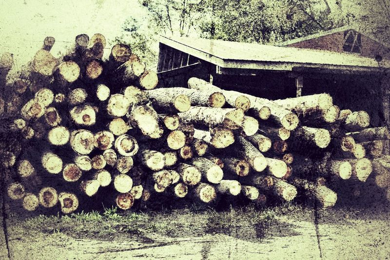 Rural lumber mill, logs ready to process. JGLowe Lumber Mill Lumber Industry Lumber No People Day Nature High Angle View Wood - Material Outdoors Architecture Abundance Pattern Close-up Cold Temperature Textured  Wood Built Structure Stack Large Group Of Objects Winter Log Land