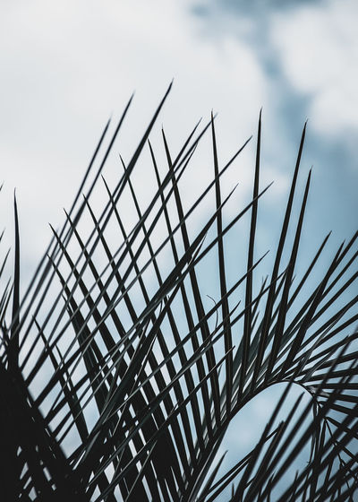 Low angle view of silhouette plant against sky