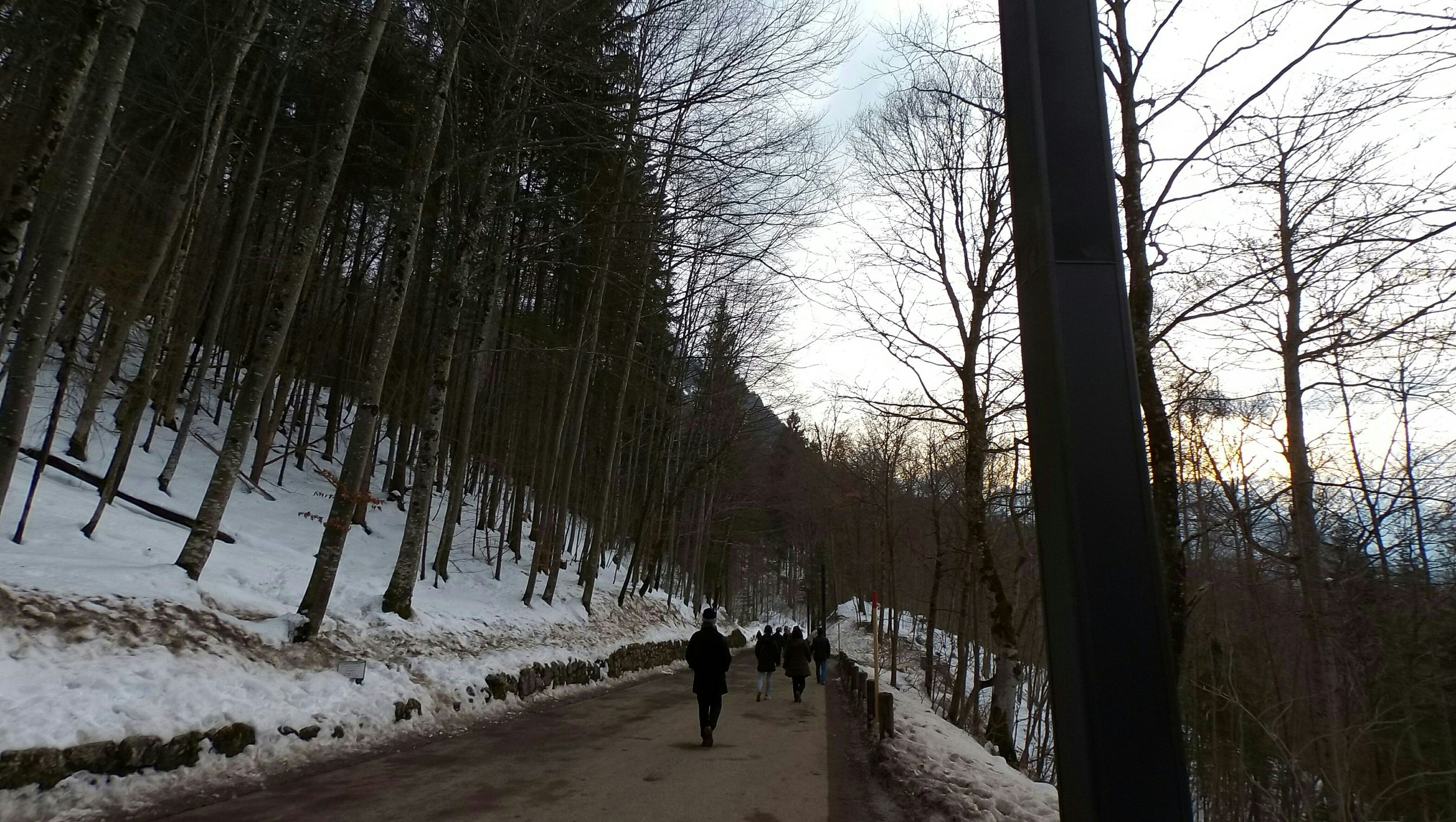 tree, winter, snow, cold temperature, walking, tree trunk, lifestyles, tranquility, season, nature, leisure activity, tranquil scene, full length, beauty in nature, rear view, men, scenics, weather, the way forward