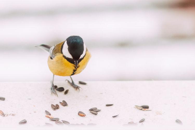 Close-up of bird perching