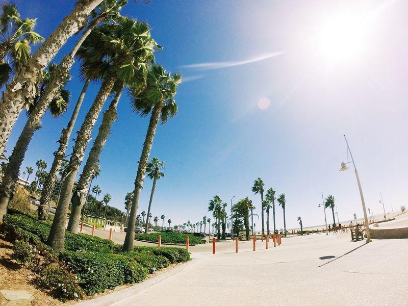 Venice Beach Beach Beautiful Birds California Los Angeles, California Outdoors Summer Tour Tourism Tourists Venice Venice Beach