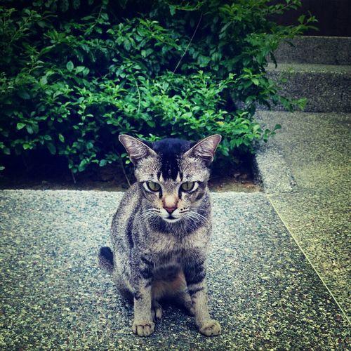 Cat Hunting  Cat♡ Cat Lovers
