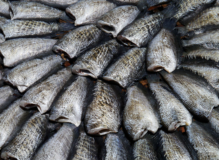 Animal Backgrounds Close-up Fish Fish Market Fishing Industry Food Food And Drink For Sale Freshness Full Frame Healthy Eating High Angle View Large Group Of Objects Market No People Raw Food Retail  Retail Display Seafood Still Life Vertebrate Wellbeing