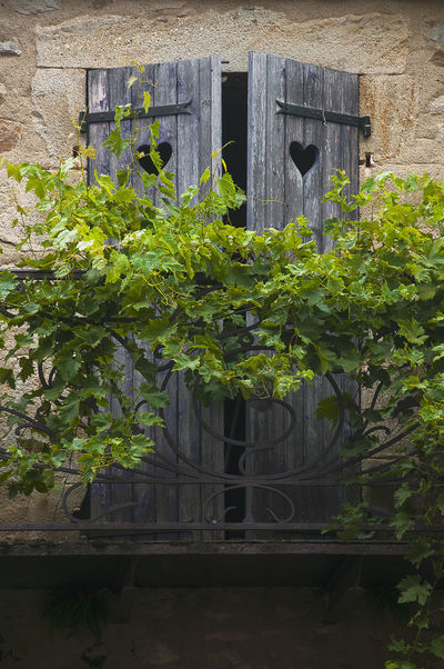 balcony with ranking vine plant and hearts in the shutter in Montpeyroux in Auvergne, France Architecture Auvergne Beautiful France Green Pitoresque Plants Rural Travel Balcony Building Exterior Built Structure Close-up Day Heart Leaf Montpeyroux No People Outdoors Plant Stone Stone Material Travel Destinations Village Window