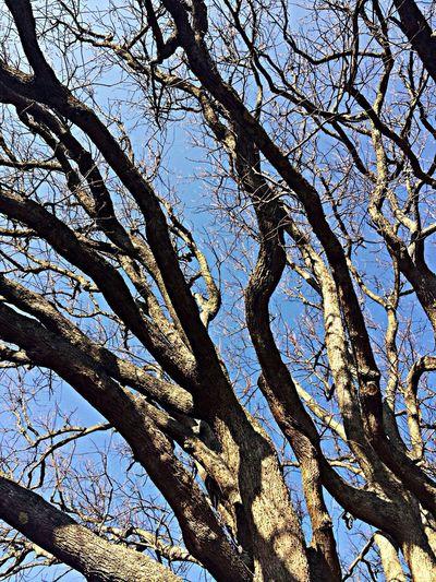 My art work ;) Photography Trees Art Beautiful