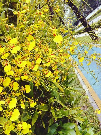Orchid Orchid Flower Orchid On Tree Orchids Collection Flower On The Tree Flower Collection Yellow Orchid Yellow Flower Flower Ornamental Plant Plant On Tree Orchid Photography Flower Photography Nature Beauty Of Nature Beauty Of Flower Beautiful Flower Orchid Collection Flower Color Orchid Colours Sideways Sidewalk Along The Way View