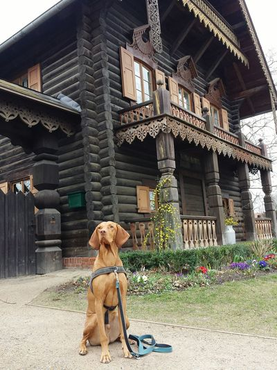 Potsdam Built Structure Architecture Wooden Structure Wooden Building Old House Eye4photography  Ijuma Von Terra Lebusana EyeEm Best Shots Hungarian Vizsla Vizslaoftheday