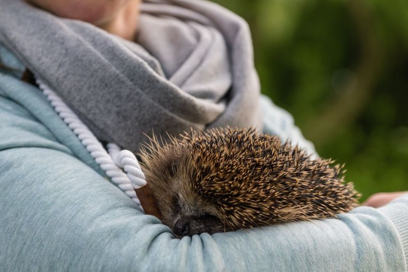 Lotte kurz vor der Auswilderung Animals Lotte Auswilderung Igel Hedgehog EyeEm Selects Midsection One Person Human Body Part One Animal Hedgehog Mammal Focus On Foreground Hand Close-up