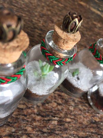 Handmade For You No People Jardim No Pote Terrarium🍀 Plant Litle Bottle Close-up