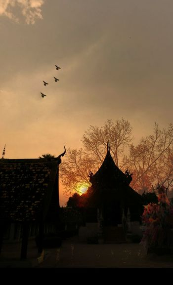 Bird Sunset Flying Silhouette Architecture Animal Wildlife Sky No People Animal Themes Outdoors Beauty In Nature Curve Line Of The Building Building Story Backgrounds Nature_collection Environmental Conservation Leaves And Branches Temple Of Thailand