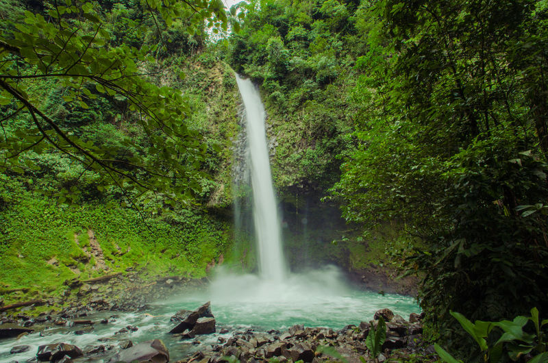 Fortuna waterfall, with its fall of 77 meters, a natural spectacle in the middle of the jungle An Eye For Travel Fortuna Nature Beauty In Nature Catarata Day Forest Freshness Green Color Growth Long Exposure Lush Foliage Motion No People Outdoors Power In Nature Scenics Tranquil Scene Travel Destinations Water Waterfall