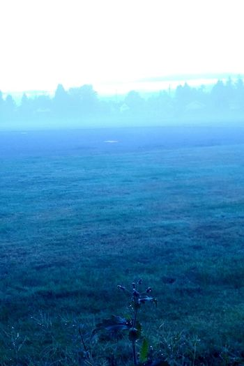 Tranquil Scene Fog Landscape Weather Non-urban Scene Field Day Solitude Outdoors Winters Here Cold Temperature Treethugger SummersEnd Halloween EyeEm Personal Perspective Winter Misty