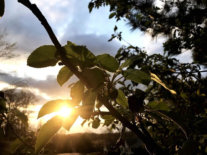 Growth Tree Nature Sky No People Close-up Branch Leaf Beauty In Nature Sunlight Freshness Sun Glare Sun Glare And Plant Outside Outside Photography Outdoors Photograpghy  Outdoors Plants And Flowers Plants 🌱 Leaves🌿 Leaves_collection