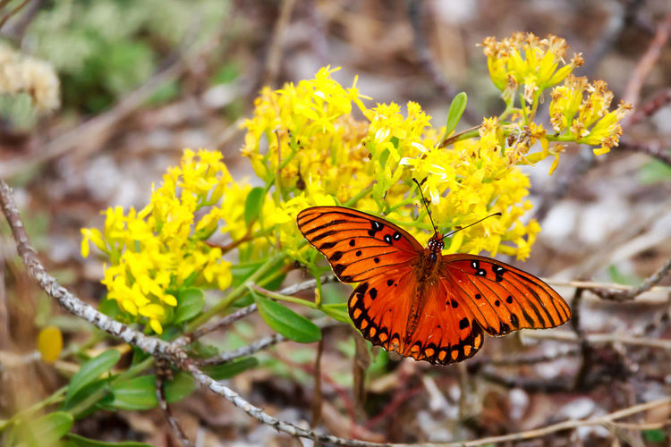 Insect Animal Wildlife Flower Invertebrate Animal Themes Animals In The Wild Animal Wing Animal Beauty In Nature One Animal Butterfly - Insect Flowering Plant Plant Fragility Vulnerability  Close-up Focus On Foreground Yellow Nature Day Flower Head No People Outdoors Butterfly Pollination