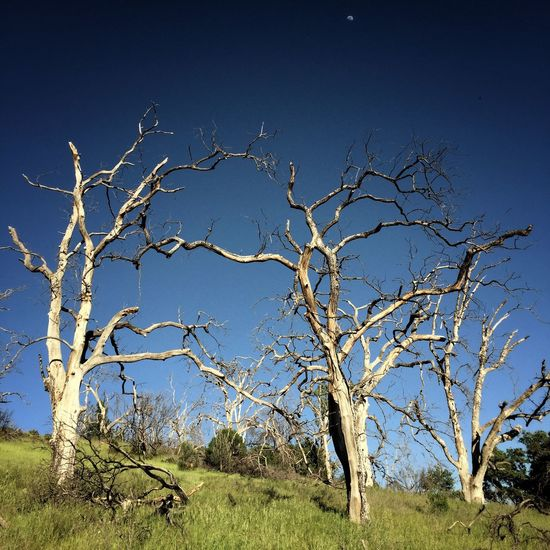 Deadwood forest Landscape Landscape_Collection Landscape_photography Landscapes Tree Trees TreePorn Moon The Secret Spaces The Week On EyeEm