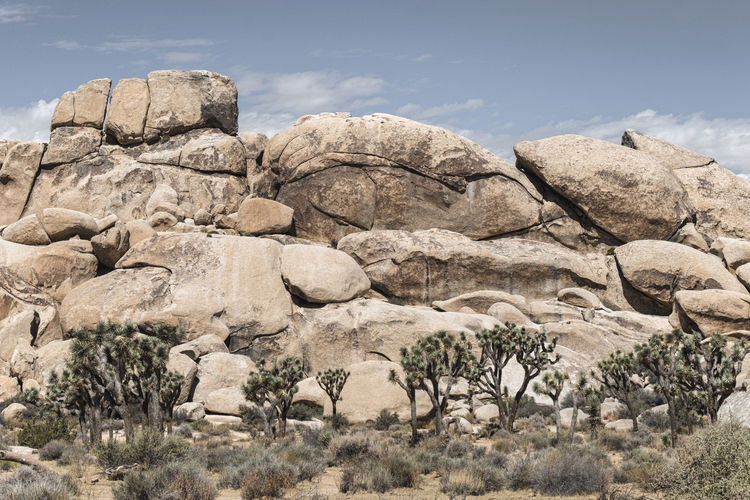 Arid Climate Beauty In Nature Day Nature No People Outdoors Physical Geography Rock - Object Rock Formation Sky Tree