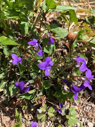 Flowering Plant Flower Plant Beauty In Nature Fragility Vulnerability  Freshness