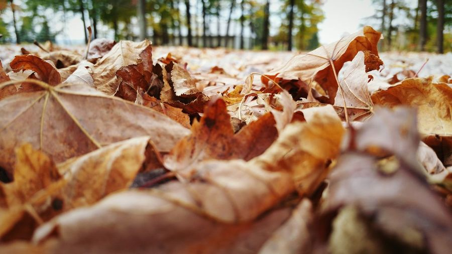 Close-up of fallen autumn leaves