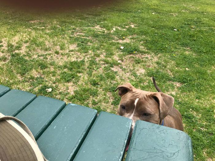 Eye on the prize EyeEm Selects Mammal One Animal Animal Themes Animal Pets Domestic Animals Canine Plant Dog