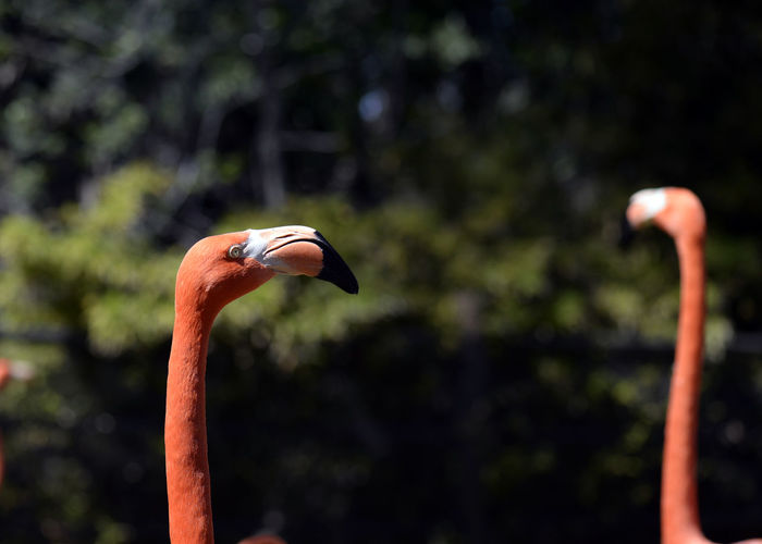 Animal Themes Animal Wildlife Animals In The Wild Beak Bird Close-up Day Flamingo Focus On Foreground Nature No People One Animal Outdoors Tree