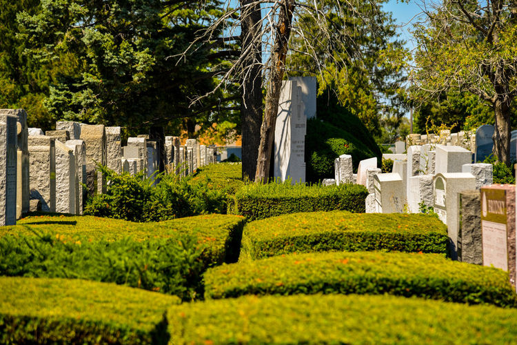 Cemetery Green Color Growth Headstones Hedge Monument Statue Tree