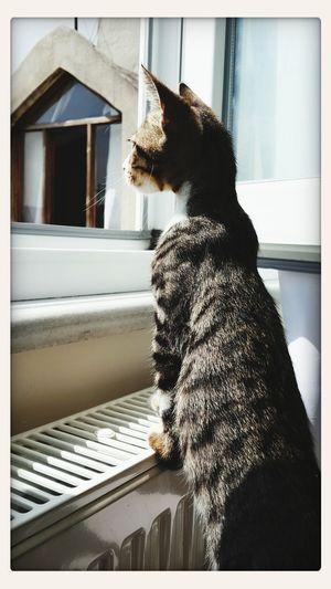 Piremses <3 I Love My Cat ❤ First Eyeem Photo