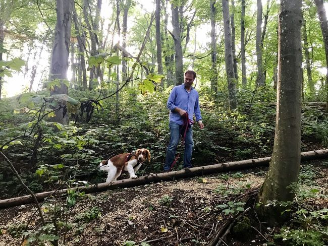 Man with Welsh Springer Spaniel in the forest Dog Forest Pets Tree One Animal Full Length WoodLand Animal Themes One Person Nature Domestic Animals Tree Trunk Mature Adult Day Outdoors One Man Only Adults Only Forest Path Forestwalk Adult