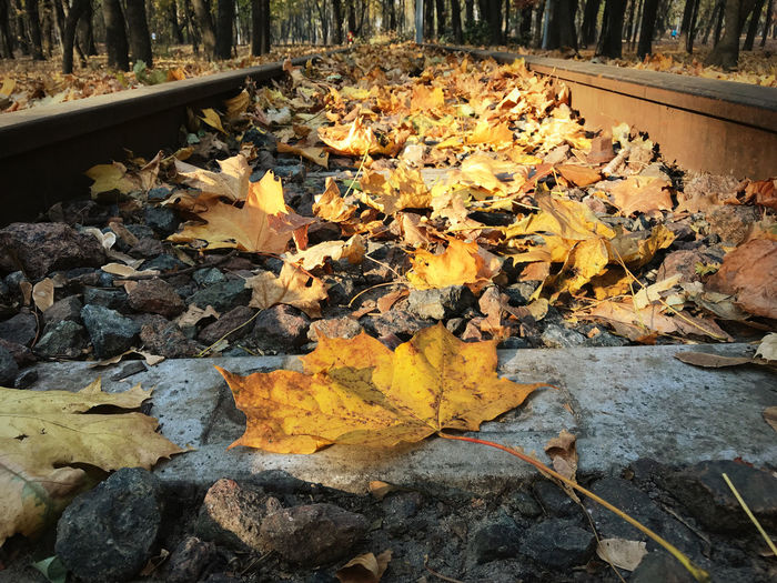 Close-up of autumn leaves on railroad track