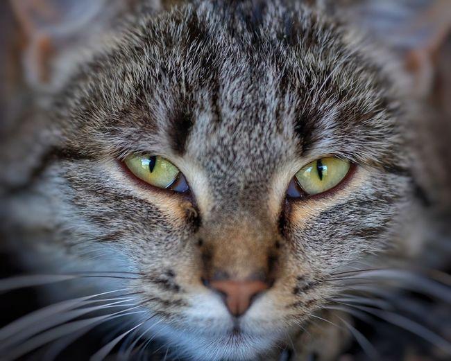 Portrait Pets