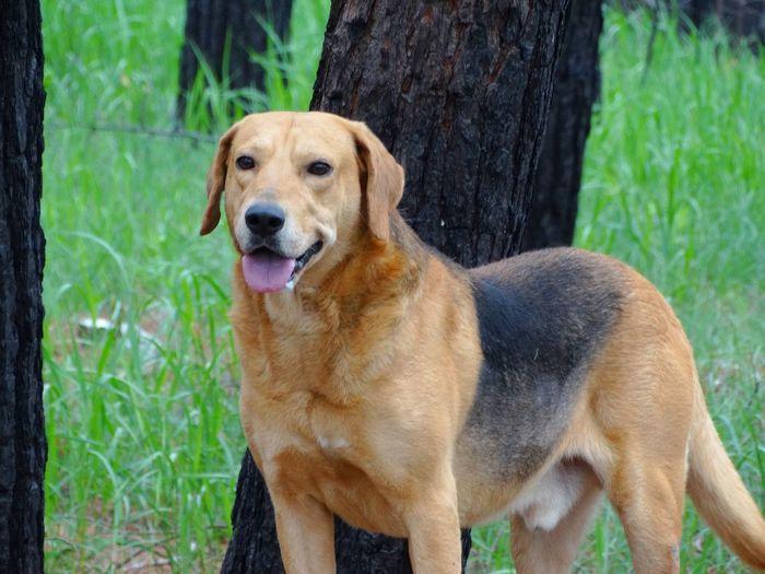Portrait of dog sitting on tree trunk