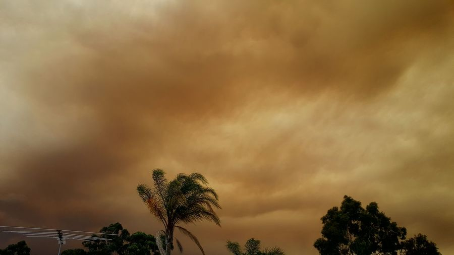 Smoke in the sky, from a nearby bushfire 🔥🔥 Global Warming Fire In The Sky Fire Bushfire Smoke Smokey Sky Natural Disaster Mothernature Danger Heatwave Australian Weather Gloomy Tree Sky Dramatic Sky Storm Cloud Ominous Atmospheric Mood Moody Sky