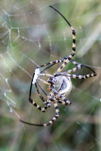 Invertebrate Spider Insects Collection Spider Spider Web Insect Insect Photography Wildlife Wildlife & Nature Animal Leg Close-up Outdoors Trapped Danger Nature Fragility