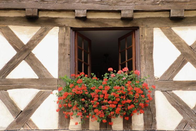 Flower plants against built structure