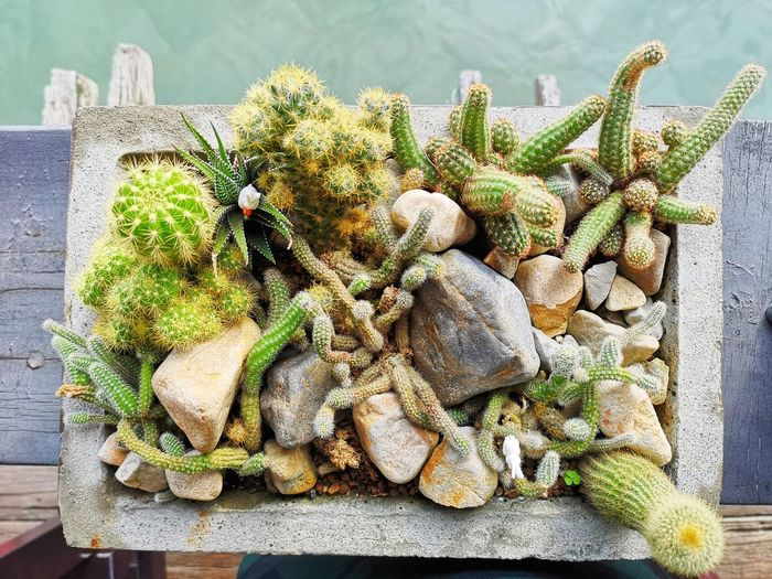 Flower Flower Head Close-up Plant Wilted Plant Commercial Fishing Net Seashell Cactus Prickly Pear Cactus Barrel Cactus Dried Plant Animal Shell Dried Dead Plant Succulent Plant Sharp Saguaro Cactus Needle - Plant Part Fungus Tortoise Shell