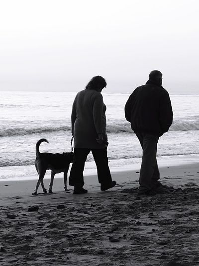 Walking On Beach Couple With Dog Shore Beach Waves Black & White Photography