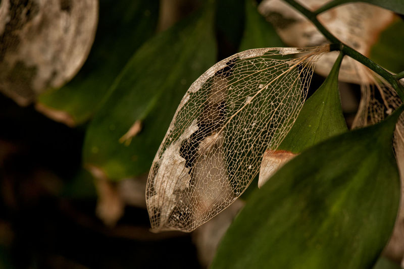 Close-up Decayed Beauty Decayed Leaf Decaying Leaves Leaves_collection Nature No People Outdoors