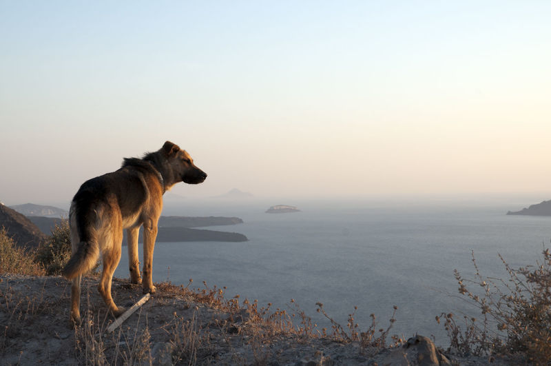 Dog on landscape against clear sky
