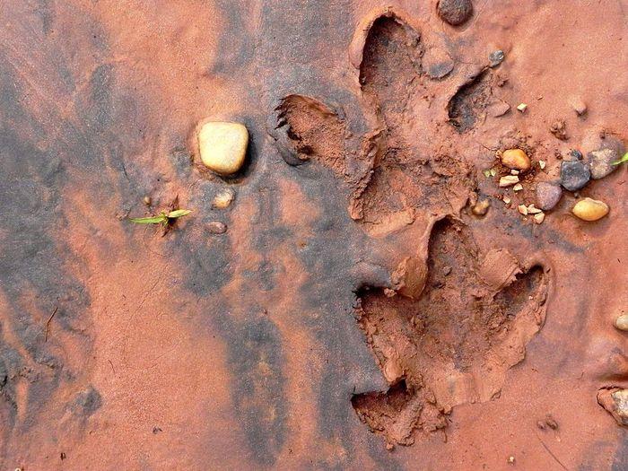 capivara Minasgerais Minas Gerais Brazil Brasil Hydrochoerus Hydrochaeris POTD Picture Pic Picoftheday Animal Animal Themes Rastro Track Capivara Capybara Rock - Object Day Nature Full Frame Outdoors Arid Climate No People